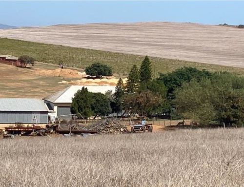 COMING UP ON AUCTION – MALMESBURY FARM WITH VINEYARDS AND MOVABLES ASSETS